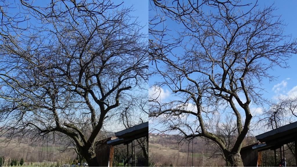 przycinanie drzew owocowych
