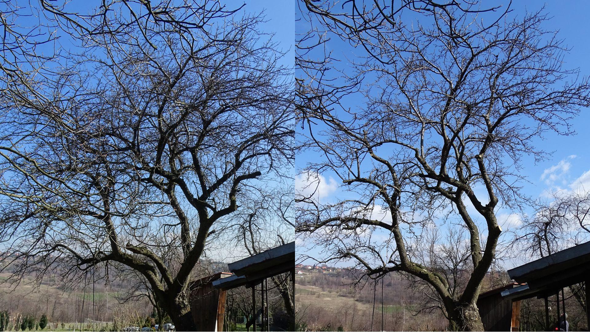 Pielęgnacja drzew - prześwietlanie korony