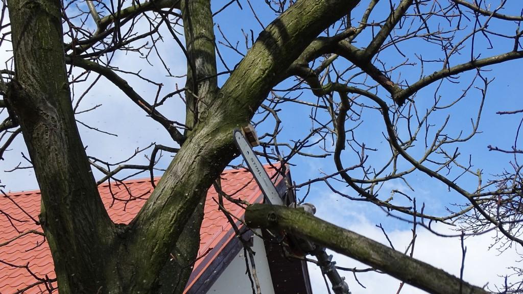 przycinanie gałęzi drzew kraków