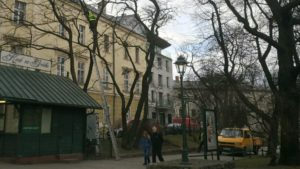 przycinał gałęzie drzew bez kasku na plantach w Krakowie
