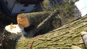 wycinanie dużych drzew Krakow
