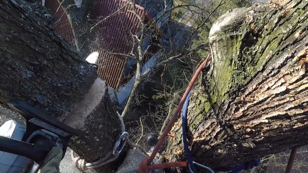 wycinanie drzew alpinistycznie arborystycznie Malopolska
