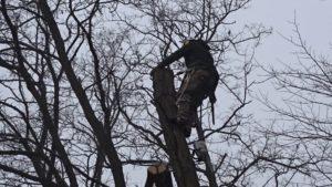 wycinanie po kawalku drzew uslugi
