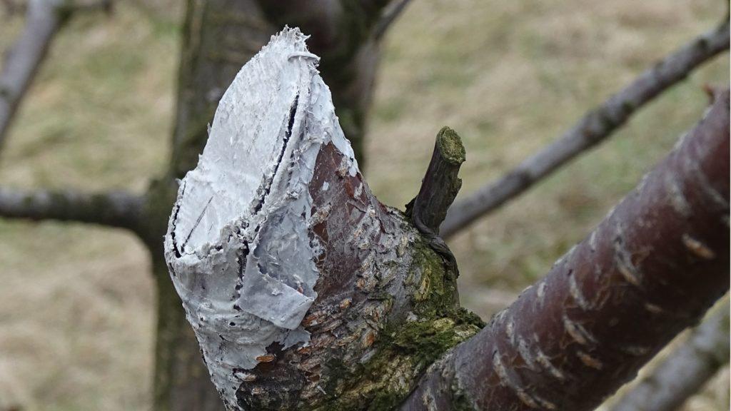 zabezpieczenie drzew owocowych