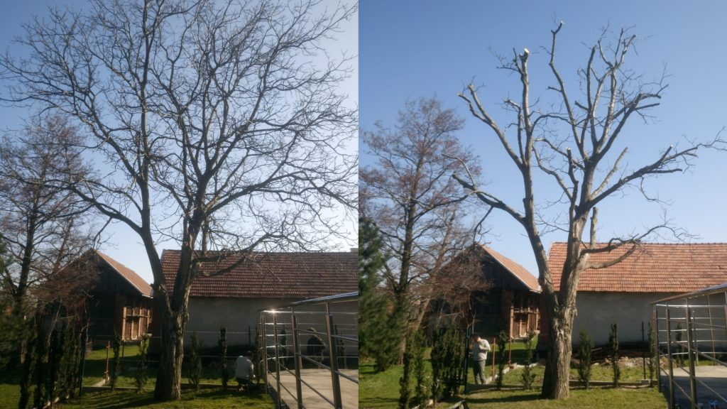 drzewa owocowe orzech