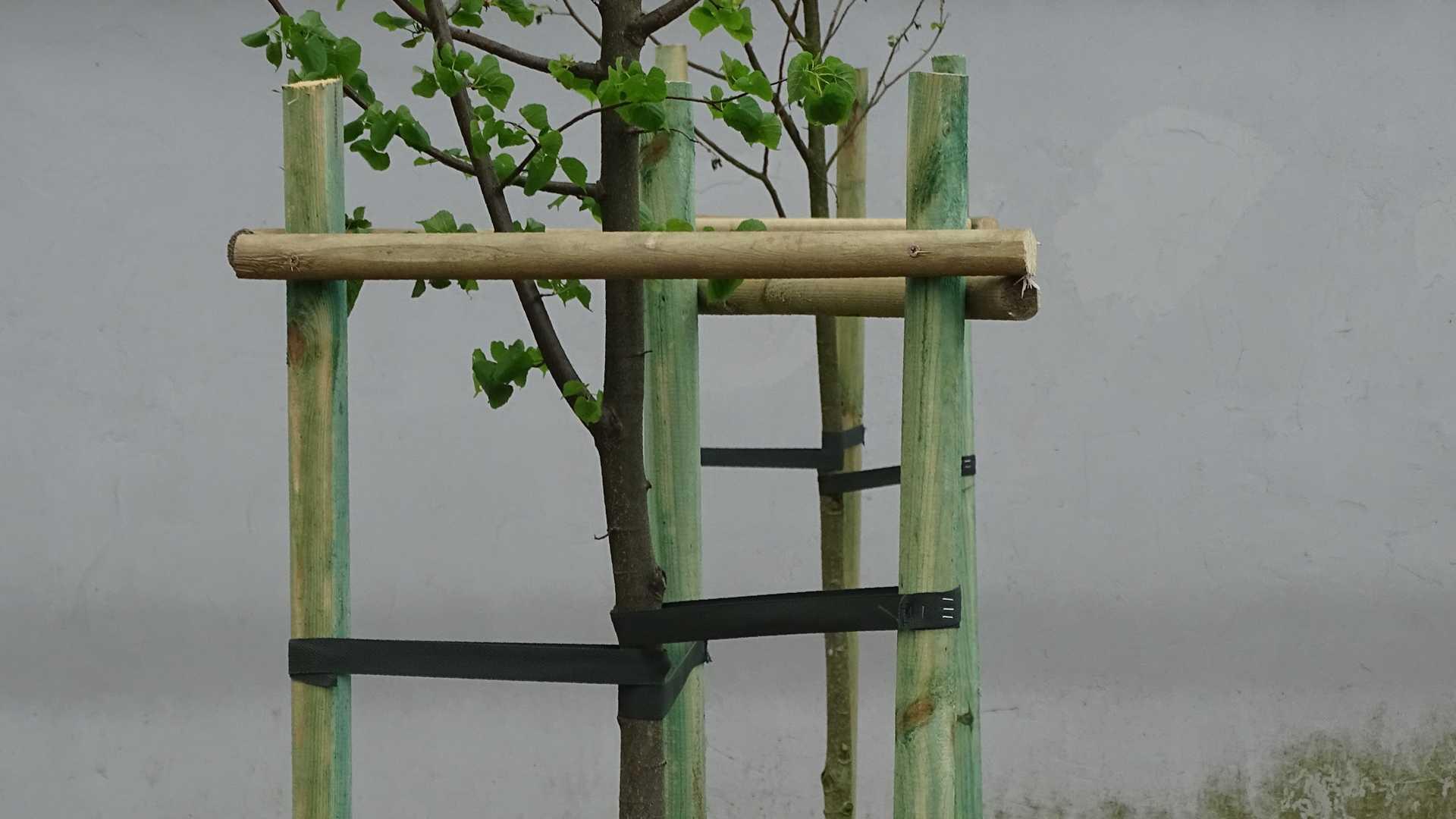 Sadzenie drzew oraz krzewów