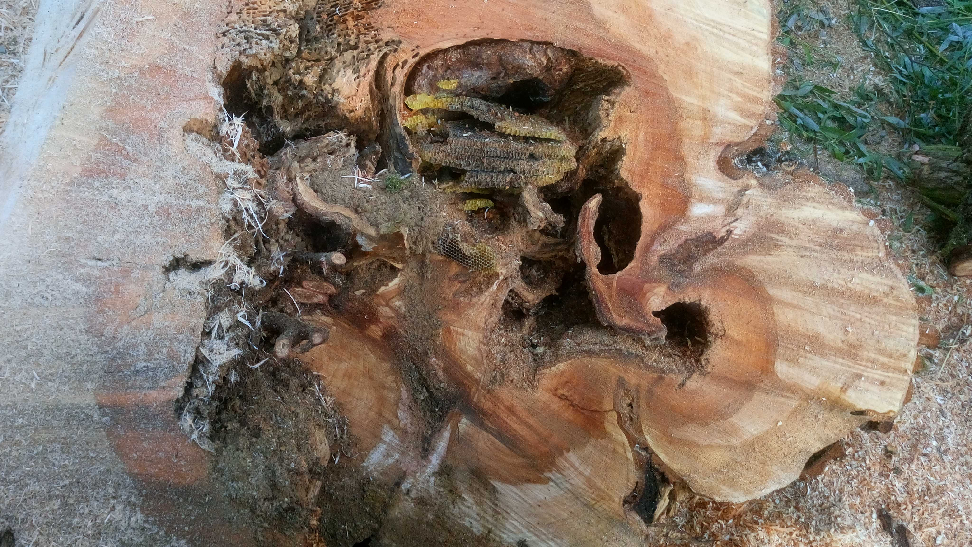 Bogactwo wnętrza - co kryją stare drzewa